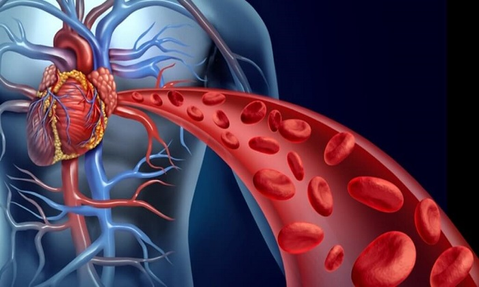 8 خوراکی برای تقویت سلامت گردش خون