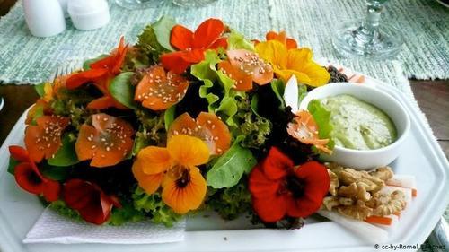 آشنایی با گلهای خوراکی و خواص آنها(+عکس)