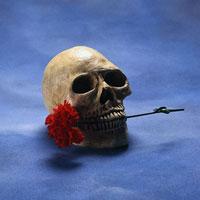 استخوان جمجمه در جدول| نام استخوان جمجمه