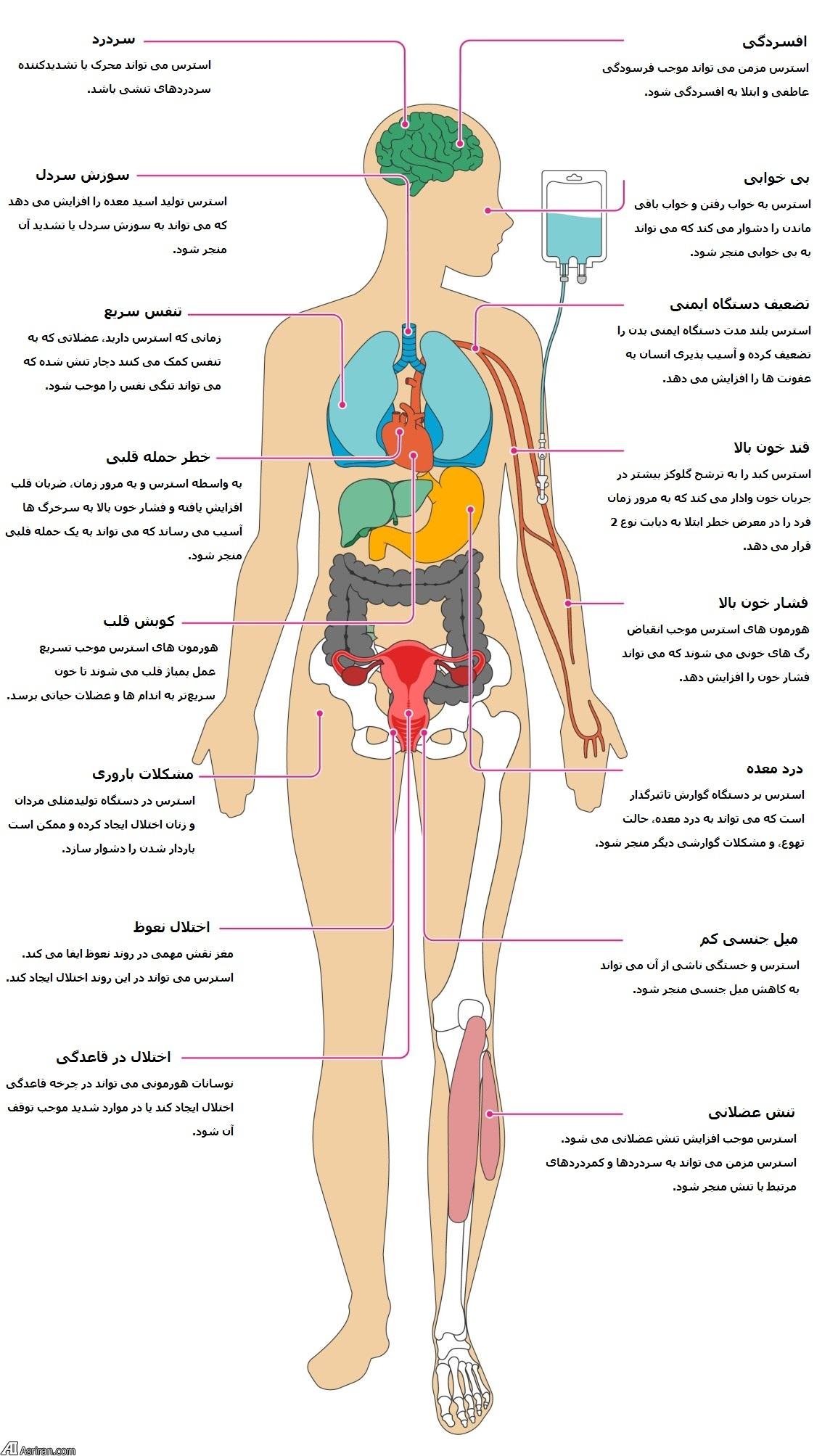 استرس مزمن و اندام های بدن ما! (+اینفوگرافی)