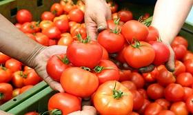 برای کبد چرب، گوجه بخوربد