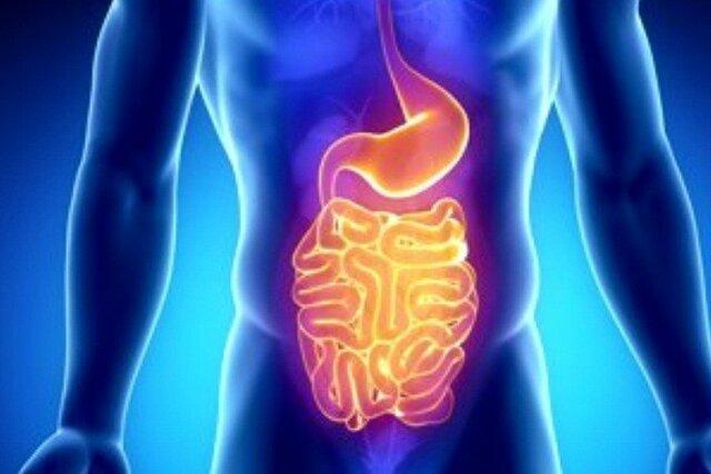 تاثیر برخی باکتریهای روده بر خطر ابتلا به سرطان