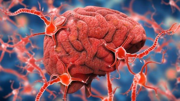 تایید داروی آلزایمر حاوی جلبک در چین