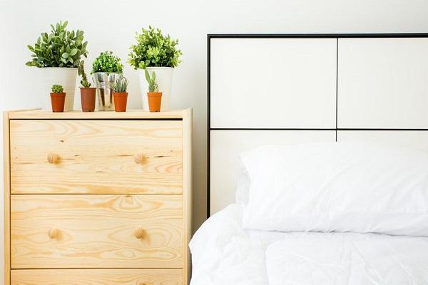 خوابی آرام با کمک گیاهان