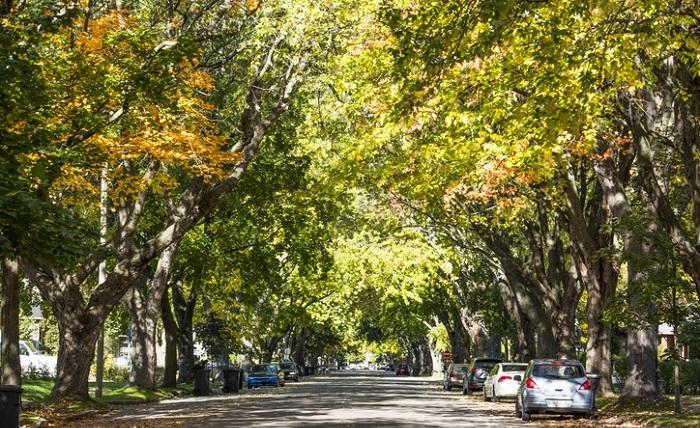 فواید سلامت شگفت انگیز زندگی در کنار درختان