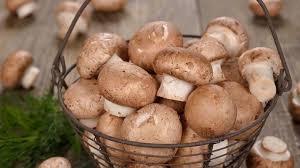 مصرف قارچ خطر ابتلا به سرطان پروستات را کاهش میدهد