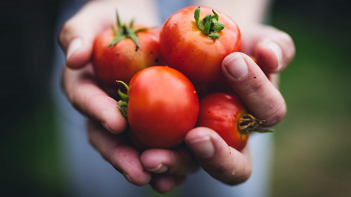 مهار بیماری کبد با گوجه فرنگی!