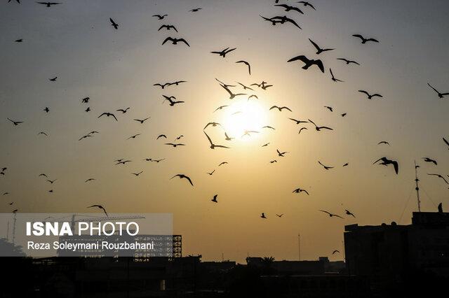 هوای پایتخت برای حساسها ناسالم میشود