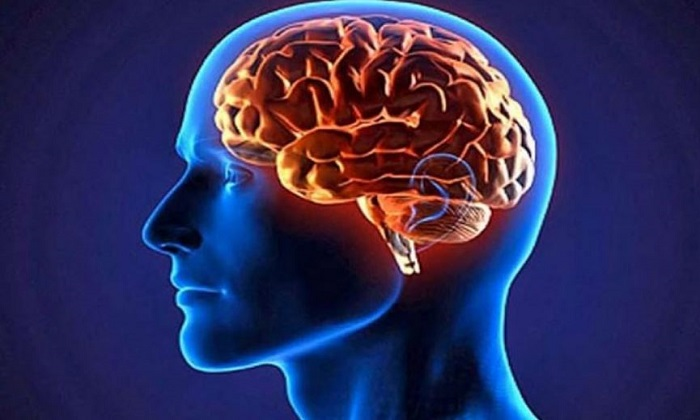 چربیهای ضروری برای مغز!
