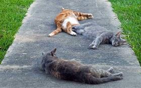 گربه ها می توانند چه کسانی را مریض کنند؟