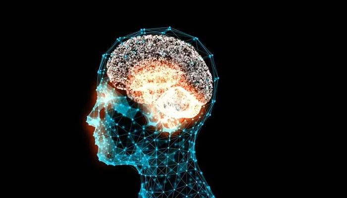 گلوتامات؛ یک پیامرسان کلیدی در مغز
